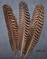Indianer Feder Raubvogel ähnlich